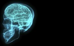 brain-001-1172516[1]
