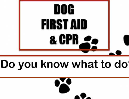 Dog CPR and First Aid: Do you know what to do?